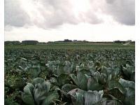 Gemüseanbau in der Bretagne
