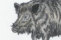 Das Wildschwein : SchUR-Stationen 2 (Heft 11/2005)