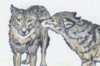 Der Wolf : SchUR-Stationen 3 (Heft 12/2005)