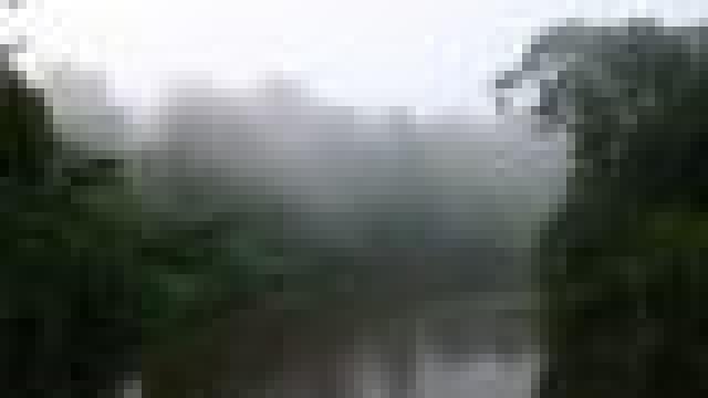 Bild: Tropische Regenwälder – Klimaanlage der Erde
